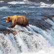 Bear on Alaska — Stock Photo #20463335