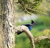 Bird — Foto de Stock