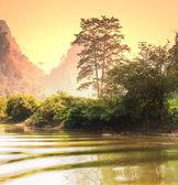 Jungle in Vietnam — Stock Photo
