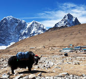 Yak in Nepal — Stock Photo