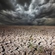 Drought land — Stock Photo #22155093