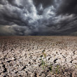 Drought land — Stock Photo #22155097