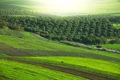 Fields in Morocco — Stock Photo