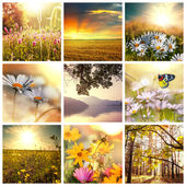 Blommor collage — Stockfoto