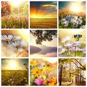 鲜花拼贴画 — 图库照片