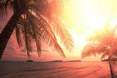 Tropical beach — ストック写真