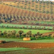 Fields in Morocco - Foto de Stock