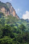 Jungle in Vietnam — Stock Photo