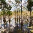 Everglades landscapes — Stock Photo