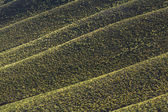 緑の丘 — ストック写真