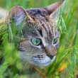 Cat in grass — Stock Photo #25236853