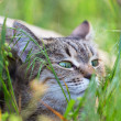 Stock Photo: Cat in grass