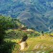 Fields in Vietnam — Stock Photo #25424977