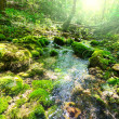 Creek in forest — Stockfoto