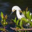 Egret — Stock Photo #27188337