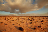 Desert in Western Sahara — Stock Photo