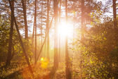 Sunny forest — Stockfoto