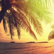 Tropical beach — Stock Photo #27861417