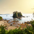 Stock Photo: Olympic coast