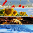 Season collage — Stockfoto