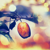 Apple — Стоковое фото