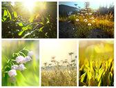 Flowers collage — Стоковое фото
