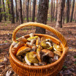 Mushroom — Stock Photo #30846379