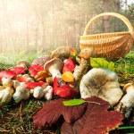 Mushroom — Stock Photo #30846441
