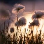 Polar flowers — Stock Photo