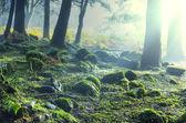 Niebla en el bosque — Foto de Stock