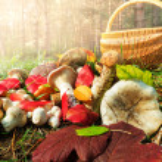 Mushroom — Stock Photo #32746405