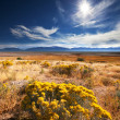 Beautiful prairie landscape — Stock Photo