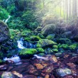 Little stream in forest — Stock Photo