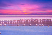 Flamingo in lake on sunset — Stockfoto