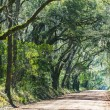 Trees tunnel - Botany Bay. Alley. — Stock Photo