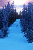 Skier between snow-capped fir trees — Foto Stock