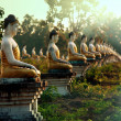 Buddhas garden — Stock Photo