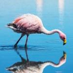Flamingo — Stock Photo #34137751