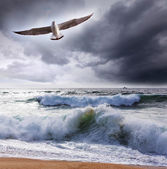 Sea gull — Stock Photo