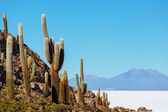 Salar de Uyuni — Stock Photo