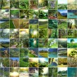 Green collage — Stock Photo #34819155