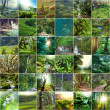 Green collage — Stock Photo #34819203