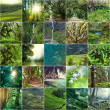 Green collage — Stock Photo #35233469