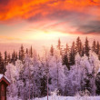 Winter forest — Stockfoto