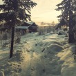 Winter forest — Stock Photo #36073793