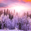 Winter forest — Stock Photo #36073831