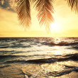 Tropical beach — Stock Photo #36073865