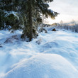 Winter forest — Stock Photo #36074045