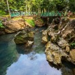 Bridge in jungle — Stock Photo