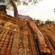 Tree in Angkor — Stock Photo #36361393